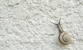 Schnecke, die an einer weißen Wand hochkriecht